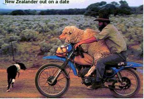 ovca baca na motorke.jpg